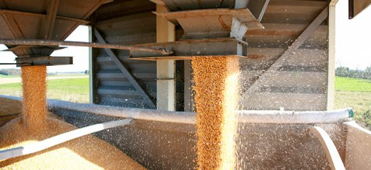 grain dropped off by farmers